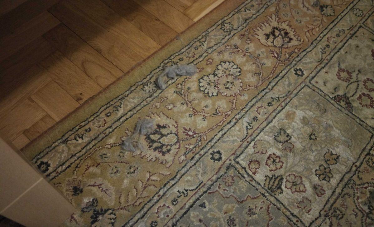 kłęby sierści kota na dywanie