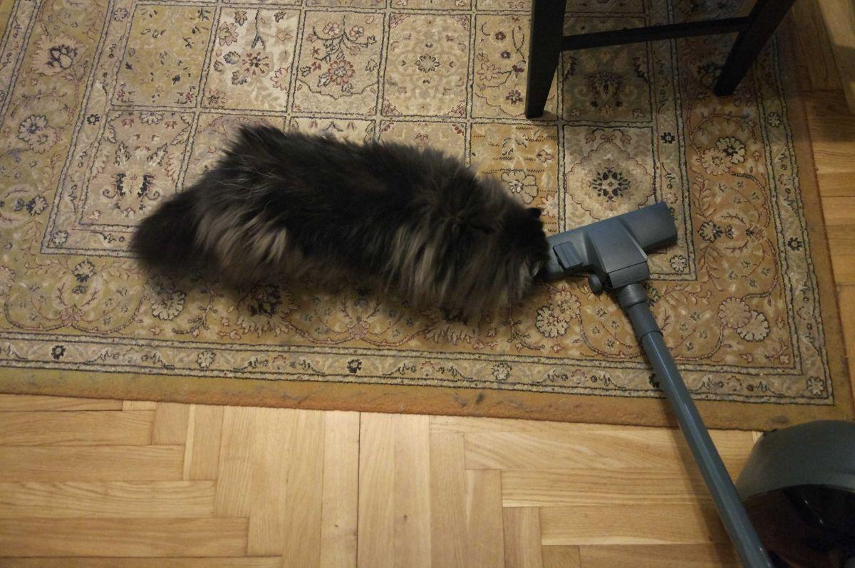 kot wącha odkurzacz Zilan ZLN8471