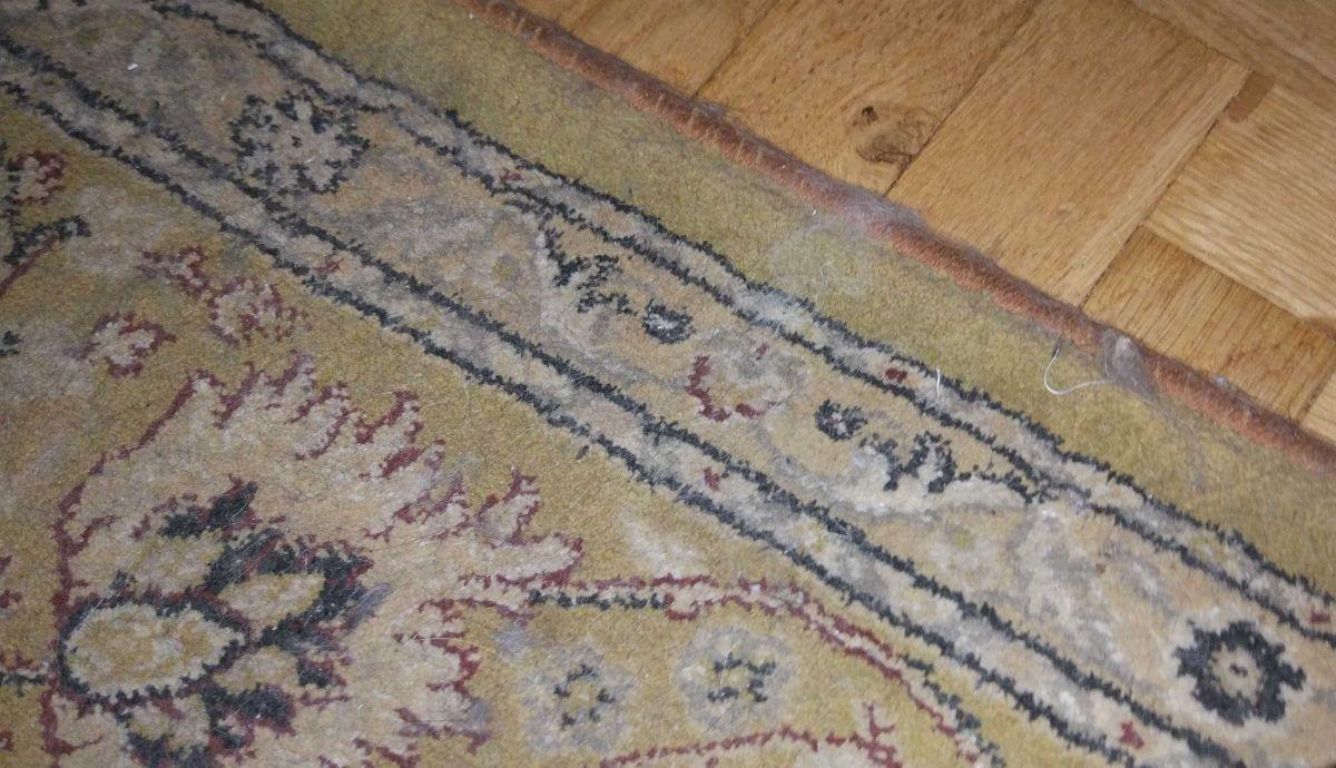 dywan, na którym pełno sierści kota przed testem iRobot Roomba 976
