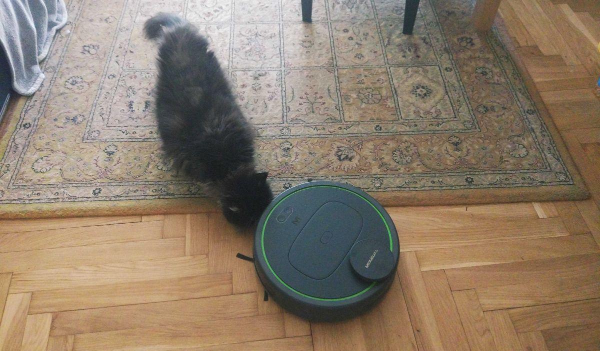 kot przy robocie sprzątającym Moneual MBOT 950