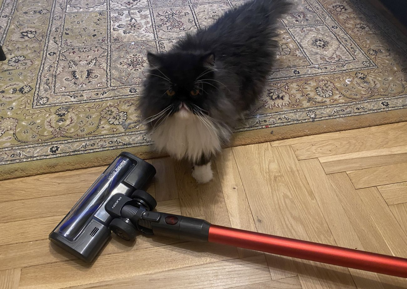 Kot perski obok odkurzacza PURON PU20