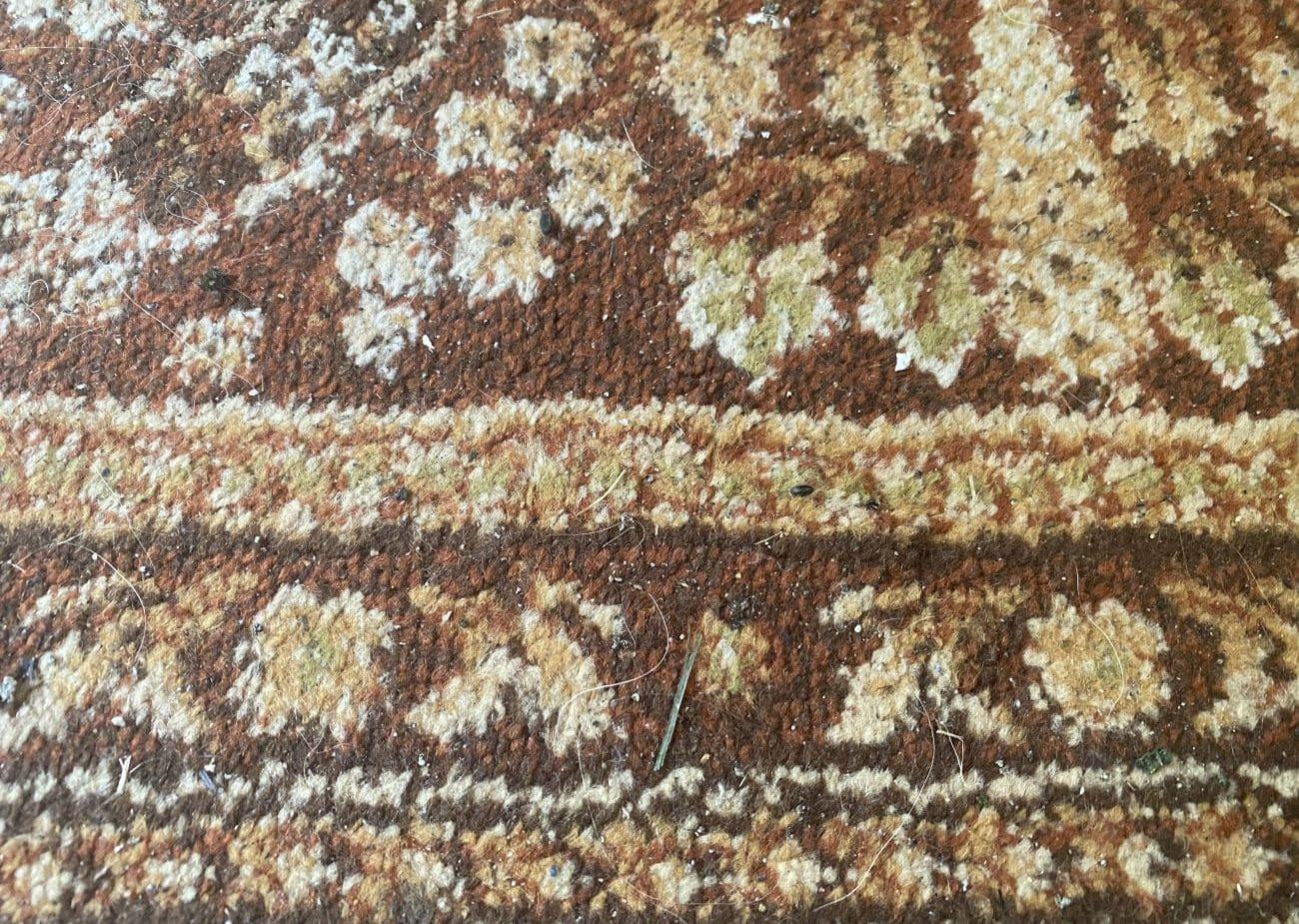 Ekstremalnie zaśmiecony dywan przed testem odkurzania Tefal X-plorer Serie 95 Animal RG7975 2
